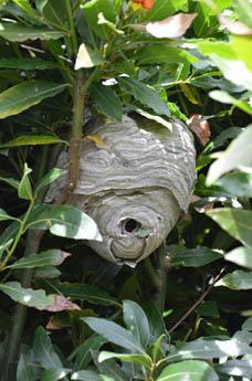 taille arbre crevette